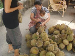Durianostoksilla Sumatran Berastagissa.