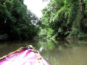 Kerran Thaimaassa Khao Sokin kansallispuiston luona oli pettymys kun kanoottiretki tarkoittikin sitä että opas meloi ja me löhösimme.