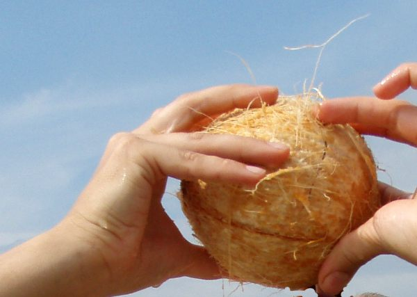 kookospähkinä kuorittuna