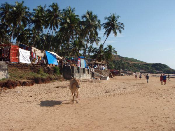 Anjunan rannalla lehmä ja takana markkinakojuja, jotka alkavat rannalta ja jatkuvat pitkälle.