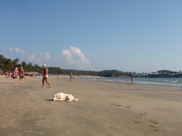 Palolemin ranta pohjoisesta etelään kuvattuna.