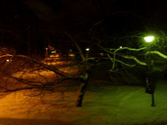 talvinen puisto