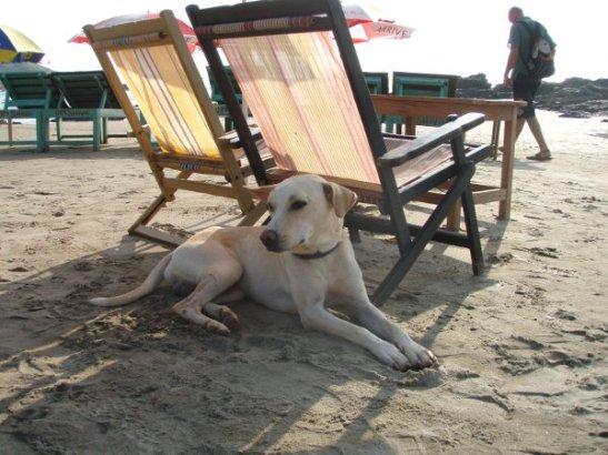 Pienellä Vagator Beachilla, jonne on ylhäältä hienot näkymät. Rannoilla on paljon ystävällisiä koiria.