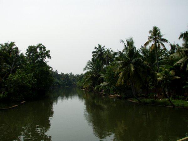 Palmumaisemaa.
