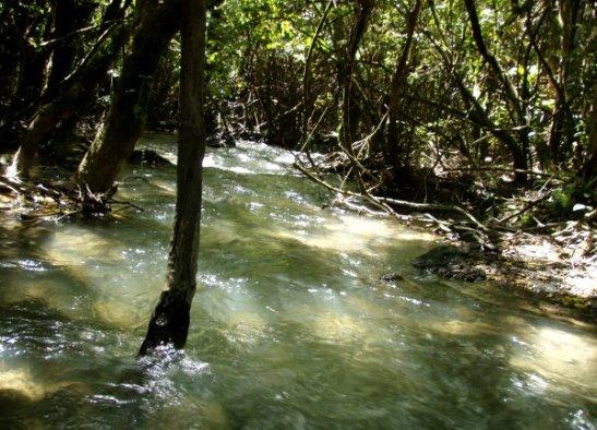 Viimeinen tunti oli kävelyä metsässä, jossa oli ihana kirkas puro.