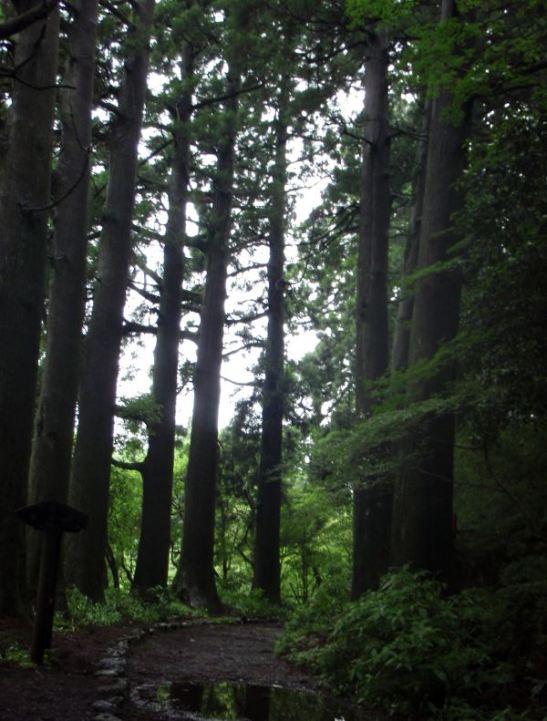 Seetripuita polun varrella Hakone-machista Moto-Hakoneen.