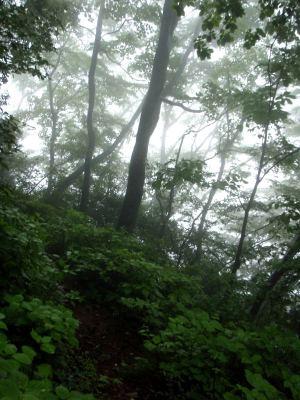 Sumuista metsää, jonne lähdin kiipeämään.