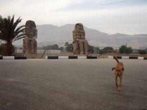 Ystävällinen koira, jonka tapasimme odotellessamme taas jotain päivän päätteeksi. Muinaisjäänteitä Luzorissa riitti, kun näitäkään ihme patsaita ei meille kummemmin esitelty. Jossain muualla ne olisivat suurnähtävyys.