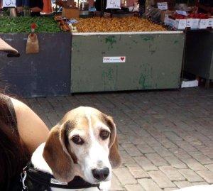 Torit ovat ulkotiloja, mutta usein koirat ovat niissä kiellettyjä. Viittaan kintaalla moiselle ja tässä olen viime kesänä Kauppatorilla koirani kanssa kahvilla.
