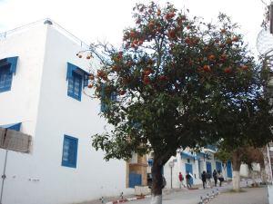 Mandariinipuu.