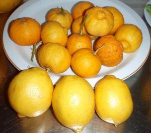 Etualalla kolme sitrunaa ja taustalla bergamontteja.