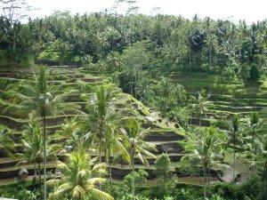 Balilla on uskomattoman nättejä porrastettuja riisipeltoja.