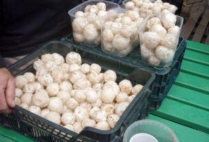 Kummallisia sieniä torilla. Ne eivät olleet herkkusieniä eivätkä oikein kuukusiakaan kai.