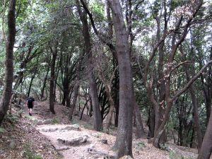Välillä kuljettiin puiden siimeksessä.