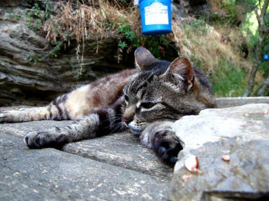 Ennen Vernazzaa oli kodittomien kissojen ruokintapaikka.