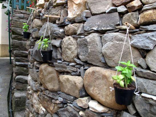 Nerokas tapa kasvattaa basilikaa.