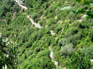 Polku kulkemassa vihreyden keskellä.