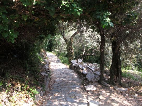 Polku puiden siimeksessä juuri ennen Cornigliaa.