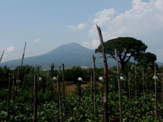Vesuvius Pompein raunioiden laidalla kasvavalta viinitarhalta kuvattuna.