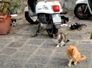 Sorrenton etelärannan kissat eivät toivon mukaan välittäneet ilotulitteiden metelistä. Kissoilla oli ruokintapaikka, johon ne kokoontuivat. Kerran näimme miehen ajavan autolla paikalle niitä ruokkimaan.