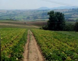 Etelä-Italian maaseutua.