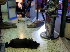 Pompeijin pienessä huvipuistossa majaili lihavia koiria.