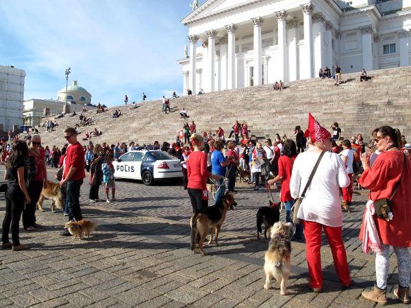 Marssin romanialaisten koirien puolesta.