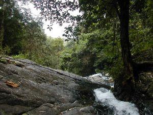 Langkawin metsää vesiputouksien luona.