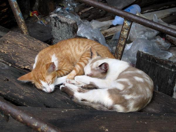 Baan Kruan ahtaiden kujien kissoja.