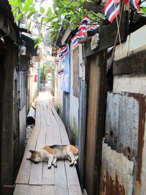 Phiman River Viewiin tarvitsee kulkea tällaista kujaa. Ylitin koiran, joka ei vaivautunut edes avannut silmiään. Banglamphun koirat ovat ystävällisiä ja ihania, mutta älä silti lähesty niitä itse, vaan pyydä ne luoksesi. Ne tulevat jos niitä kiinnostaa.