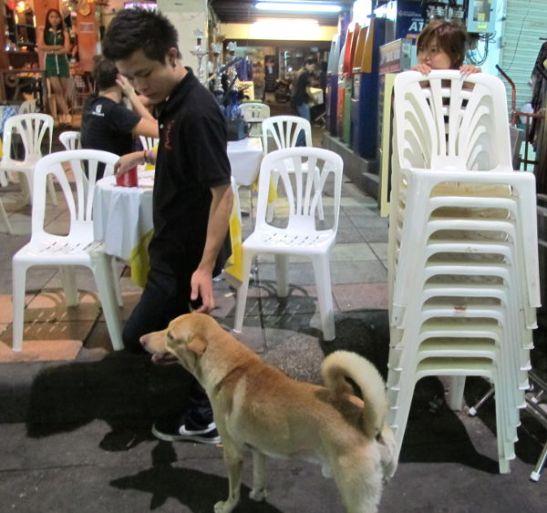 Alueen koirat ovat kivoja, mutta niitä kiinnostaa ruoka vähän enemmän kuin rapsutukset.