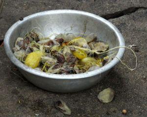 Tällaisia kuolleita silkkiperhosen toukkia tulee vuosittain 700 miljardia silkintuotannossa.