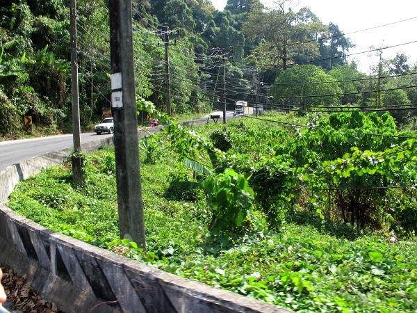 Khao Lakin eteläpäässä alkaisi kansallispuisto ihan tien vierestä.