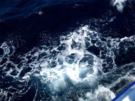Meri oli tumma ja sukellukset olivat melko syvissä vesissä - snorklaajille ei olisi ollut yleensä nähtävää.