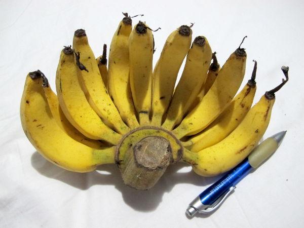 Ulkomailla alkaa aina ihmetyttämään, miksi Suomeen tuodaan vain yhdenlaisia banaaneja. Niitä kuin olisi erimakuisia pieniä ja suippoja, pieniä ja paksuja, keskikoisia ja hedelmäisiä, minikokoisia...