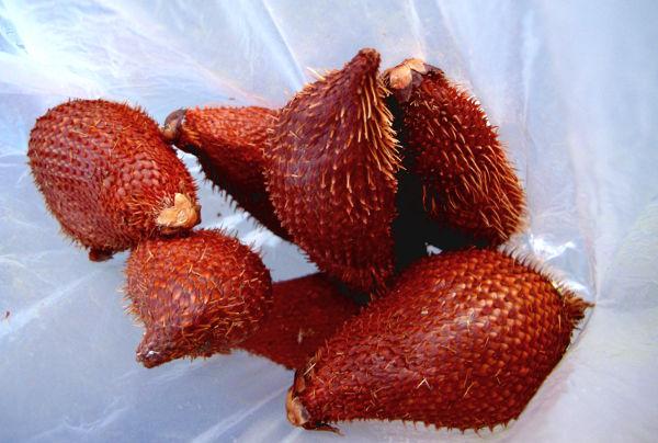 Näitä piikikkäitä hedelmiä kutsutaan indonesialaisen nimensä mukaan salakeiksi, englanniksi snakefruitiksi ja thaiksi rakamiksi. Piikit ovat pisteliäitä, mutta eivät uppoa ihoon. Näiden ostamieni hedelmien kuoren alla hedelmä oli osin mätää, kuivahtanutta ja syömäkelvontonta.