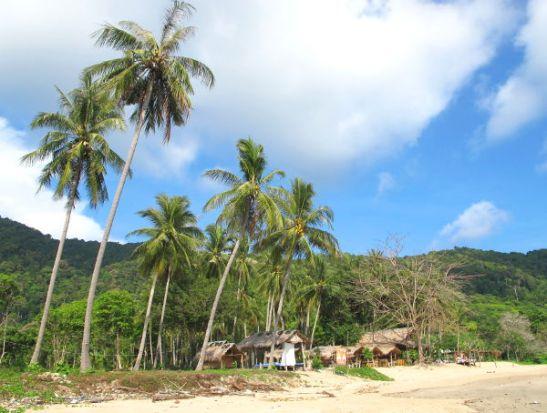 Bamboo Bayn palmurantaa.
