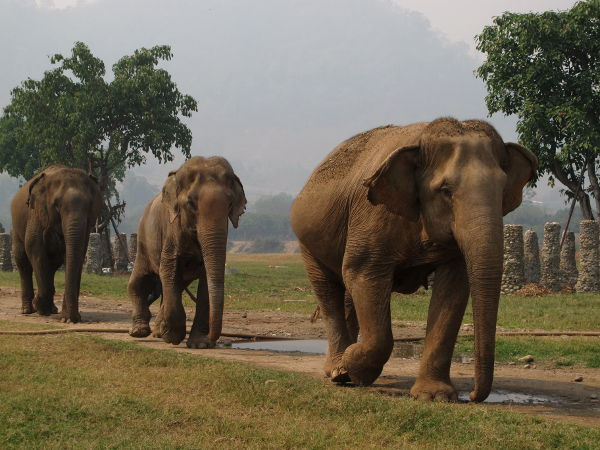 Kolmen norsun jengi.
