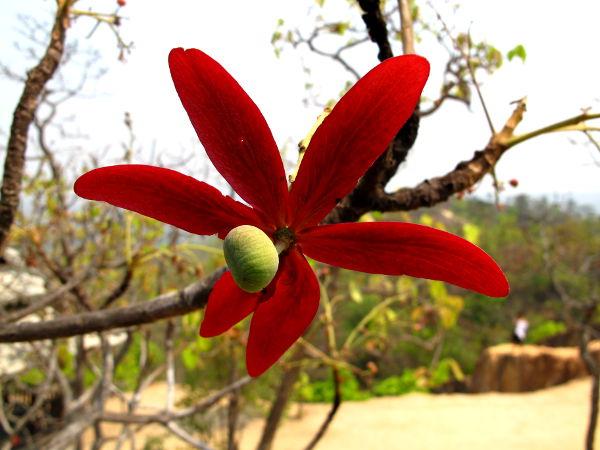 kukka pain kanjonilla