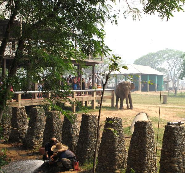 Rakennusten, puiden ja kasvimaiden ympärille on rakennettu pylväitä, jotta norsut eivät romuttaisi kaikkea.
