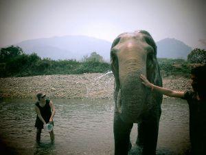 Norsujen pesussa ei itse kastunut kovin paljoa. Hieman mietitytti miten nautinnollista vedenheitto norsusta oli, koska heti kun sen edessä olevat vesimeloniviipaleet loppuivat se halusi lähteä.