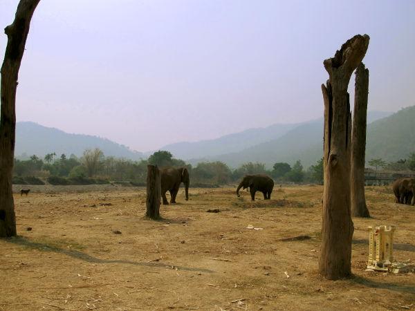 Osa Elephant Nature Parkissa vierailemisen hienoutta on maisemat.