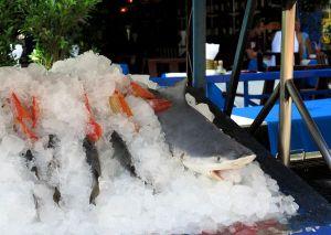 Hai myynnissä Koh Samuilla. Alueella jonne haluttaisiin sukellusturisteja tuhotaan sukellusturismin edellytyksiä tällä tavalla.