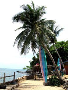 Kajakit roikkumassa palmuista Koh Lantan eteläpään kummassa majapaikassa.