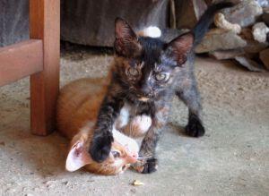 Kundan ihanat kissanpennut, joille ei kuitenkaan ole ehkä vieläkään löytynyt kotia, koska kissoja on kovin paljon enemmän tarjolla kuin on kissoja haluavia ihmisiä.