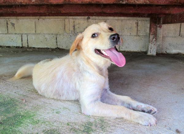 Toukokuussa tarhalle tullessani en meinannut tunnistaa Amigoa, josta oli labradorinnoutajan oloinen koiruli. Tämän koiran seuraa kaipaan kovasti. Hoidin Amigon silmätulehdusta, annoin lääkekylpyjä, putsasin korvia ja ulkoilutin. Hän on superleikkisä läheiskoira.