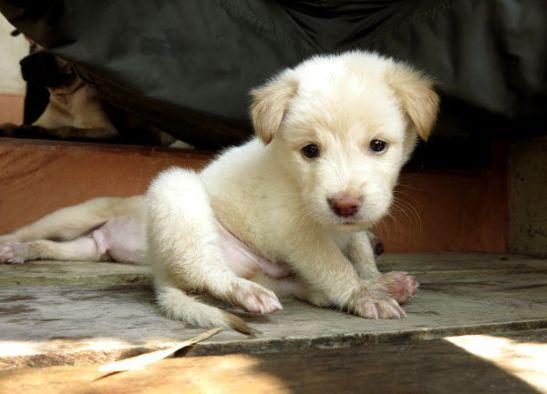 Tarhalle tuodaan koiranpentuja, joille ihmiskontaktit ovat erityisen tärkeitä. Huhtikuussa tarhalla oli tällaiset muutamaviikkoiset vaaleat sisarukset, joita kutsuimme Hamstereiksi kun ne olivat niin pieniä ja vielä uneloita.