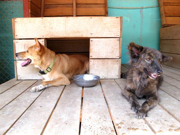 Ihania koiria.