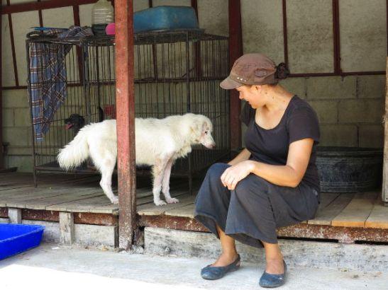 Vaikka koirien kanssa oleminen Care for Dogsin koirien pelastuskeskuksella olikin mahtavaa, ei mielestäni olisi ollut ollenkaan järkevää ottaa minulta siitä maksua, varsinkaan kun hoidin majoitukseni ynnä muun itse.