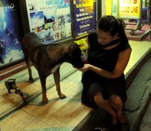 Tässäkin kaljanjuonti-ilta Khao Sanilla vaihtui ennemmin koiran ruokkimiseen.
